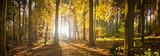 Fototapety Waldlichtung