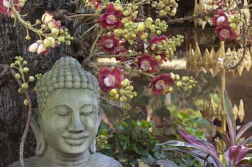 Meditación. Buda