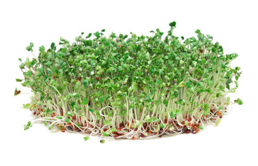 Young broccoli sprouts