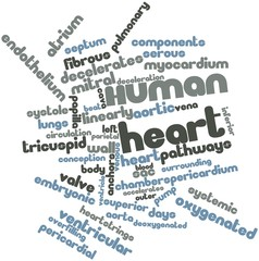 Word cloud for Human heart