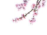 Frühlingsanfang - 47656496