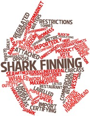 Word cloud for Shark finning