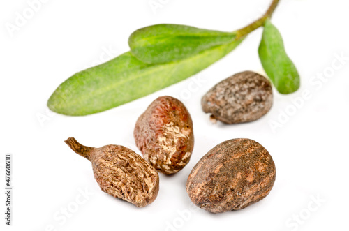 Shea nuts on white background