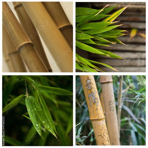 composition bambous © pixarno