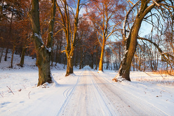 Snowy road to the forest in Poland