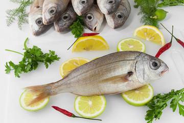Pargo, besugo, pescado blanco, crudo.