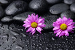 Still life with two gerbera and wet stones