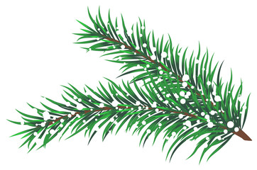 Vector illustration of fir branches with snow
