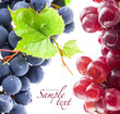 Dark and red grapes with leaves, on white background