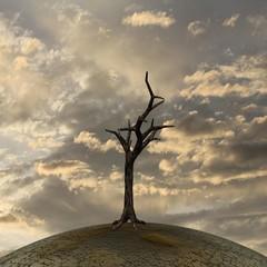 Abgestorbener Baum auf ausgetrockneter Erde
