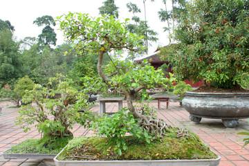 Bonsai garden at Thien Mu Pagoda, Hue, Central Vietnam.