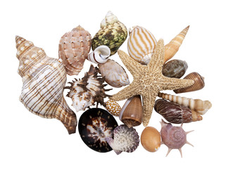 assortment beautiful seashells on a white background