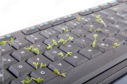 Tastatur mit Kresse