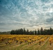 Beautiful vineyard landscape view