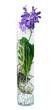 Orchidée Vanda dans un vase