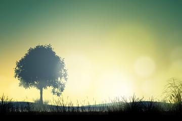 Campagna al tramonto