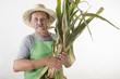 Biobauer hält frisch geernteten Mais in der Hand