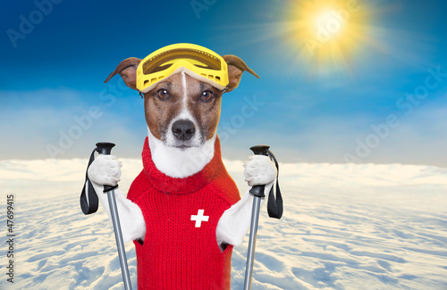 skiing dog