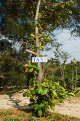 Taxi Jungle