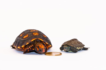 Tortoise & Turtle Money Protectors