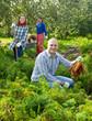 Happy family  harvesting carrots