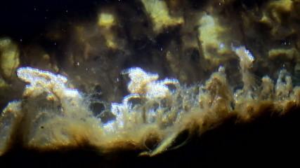 Algae and surface