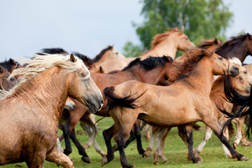 Group of horses runs in landscape