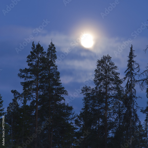 Deurstickers Volle maan Full moon shining over forest