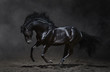 Galloping black horse on dark background - 47712826