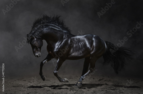 Galloping black horse on dark background