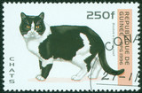 stamp printed in Guinea shows Bicolor cat