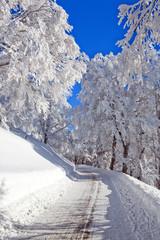 Winter, Schnee, Frost, Baum. Straße