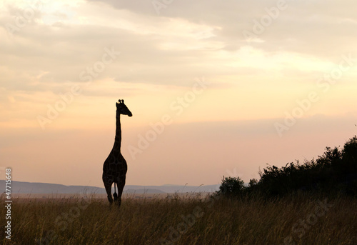 Silhouette of Giraffe in Serengeti National Park