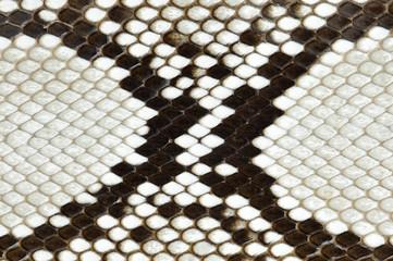 ニシキヘビの皮
