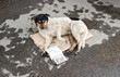Stray dog resting on the ground. Text in Russian: I badly want t