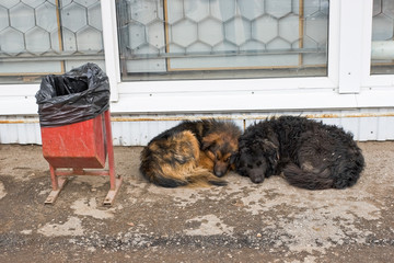 Stray dogs sleeping on the ground
