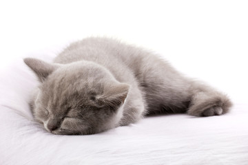 blue cat sleeping