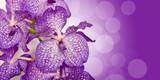 Fototapety Orchidée Vanda, bokeh violet