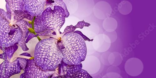 Fototapeten,blume,orchidee,blau,blau