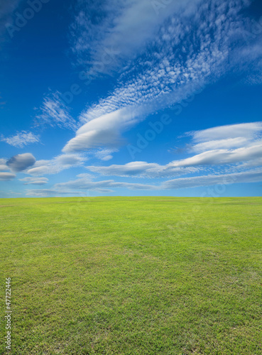 Field of green grass