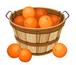 Wooden basket with oranges. Vector illustration.