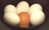 Five white and one brow Raster eggs in a bowl closeup poster