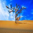 Desert conceptual background. Lonely tree and camel