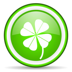 four-leaf clover green glossy icon on white background