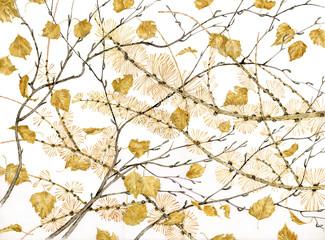 Betula alba e Larix decidua - betulla e larice
