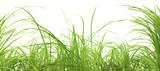 Fototapety herbe