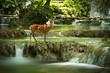 deer on waterfall