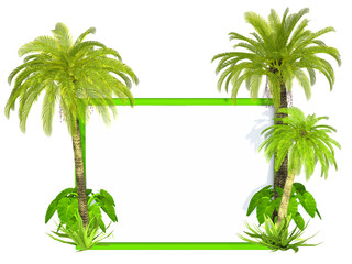 Palm trees frame