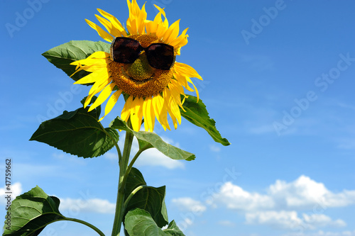canvas print picture Nice sunflower
