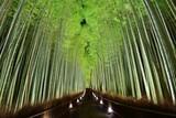 Fototapete Japan - Kyoto - Wald